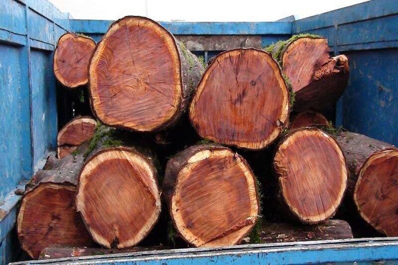 خبرنگاران چهار تن چوب قاچاق در فردیس کشف شد