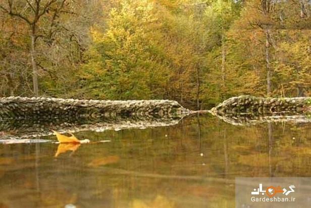 جنگل سنگده؛زیبایی حیرت انگیز جنگل و آبشار در مازندران، تصاویر