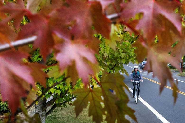 باید و نبایدهای فصل پاییز؛ افراد خشک مزاج مراقب باشند